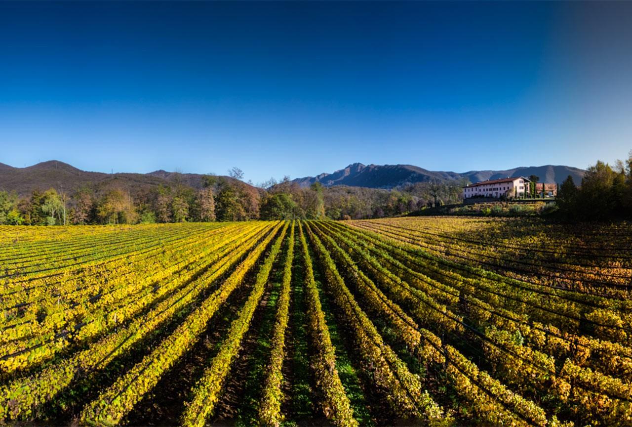 Agriloro - 'Casimiro' Red Wine (75 CL)