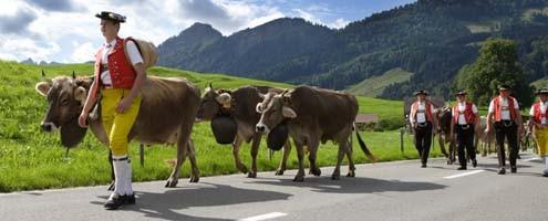 Swiss Souvenirs - Cow Bell Swiss Alpine Flowers 'Rose'