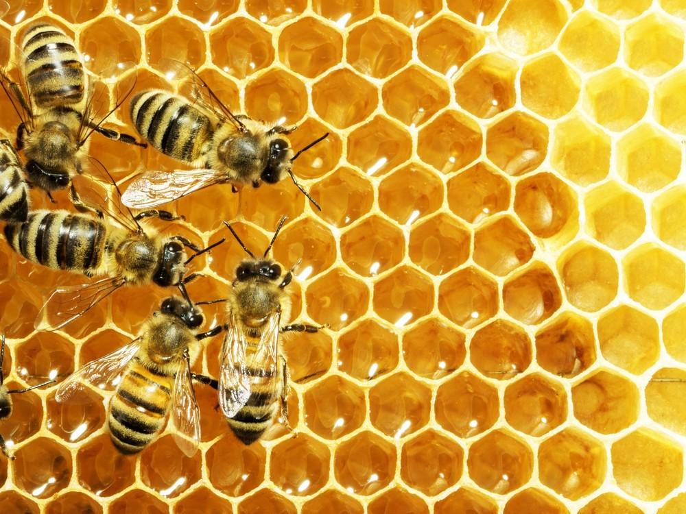 Honey P. Frehner- Thurgau Honey Blütengold Creamy (250 g)