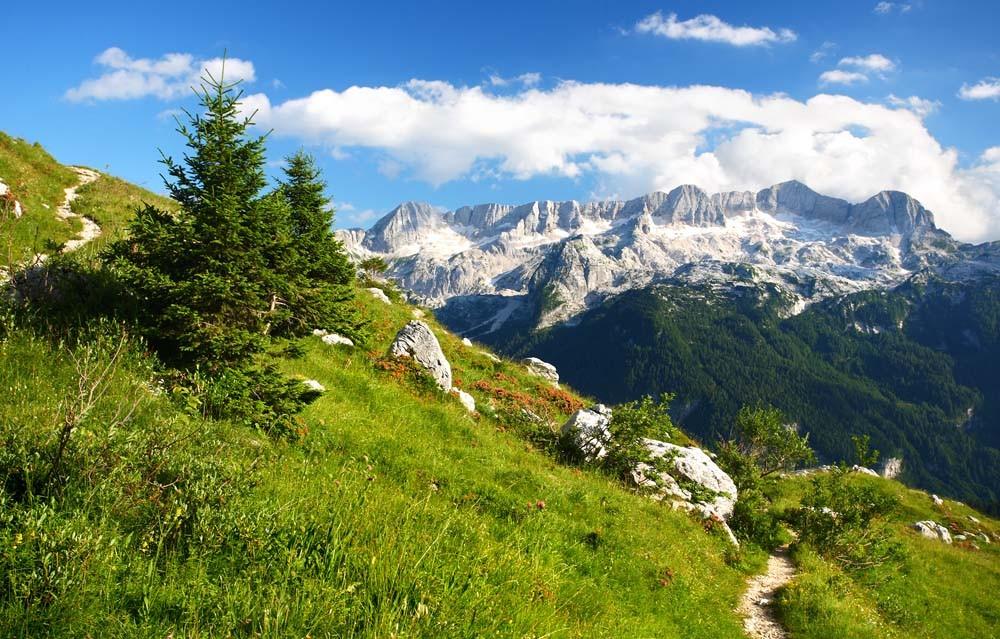 "Alpin Natürlich - Marmot Cream ""Murmeli-Salbe"" (100 ML)"