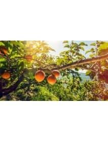 Morand - 'Abricotine' Apricot Liqueur (70 CL)