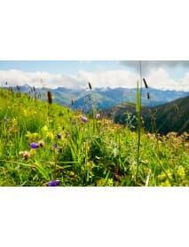 Holderhof - Alpine Herbs 'Alpenkräuter' Sirup (70 CL)