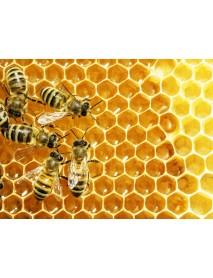 Honey P. Frehner - Zurich Honey Blütengold Creamy (250 g)
