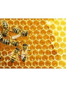 Honey P. Frehner - Sampler 'Bee Healthy' (2 x 250 g)