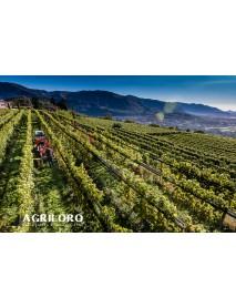 Agriloro - Oro Bianco White Wine (75 CL)