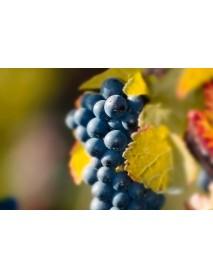 Wunderstaa - Pinot Noir Spätlese Red Wine (75 CL)