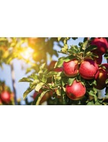 Ramseier – Apple Cider 'Suure Moscht naturtrüeb' 4% Alcohol (6 x 0.5 l)
