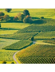 Wunderstaa - Sauvignon Blanc White Wine (75 CL)
