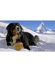 Trauffer - Wooden Bernese Mountain Dog