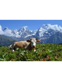 Trauffer - 'Holstein' Wooden Cow
