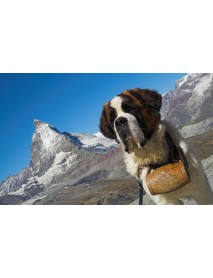Trauffer - Wooden St. Bernard Dog